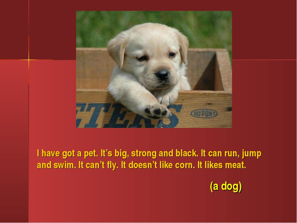 I have got a pet. It's big, strong and black. It can run, jump and swim. It c...