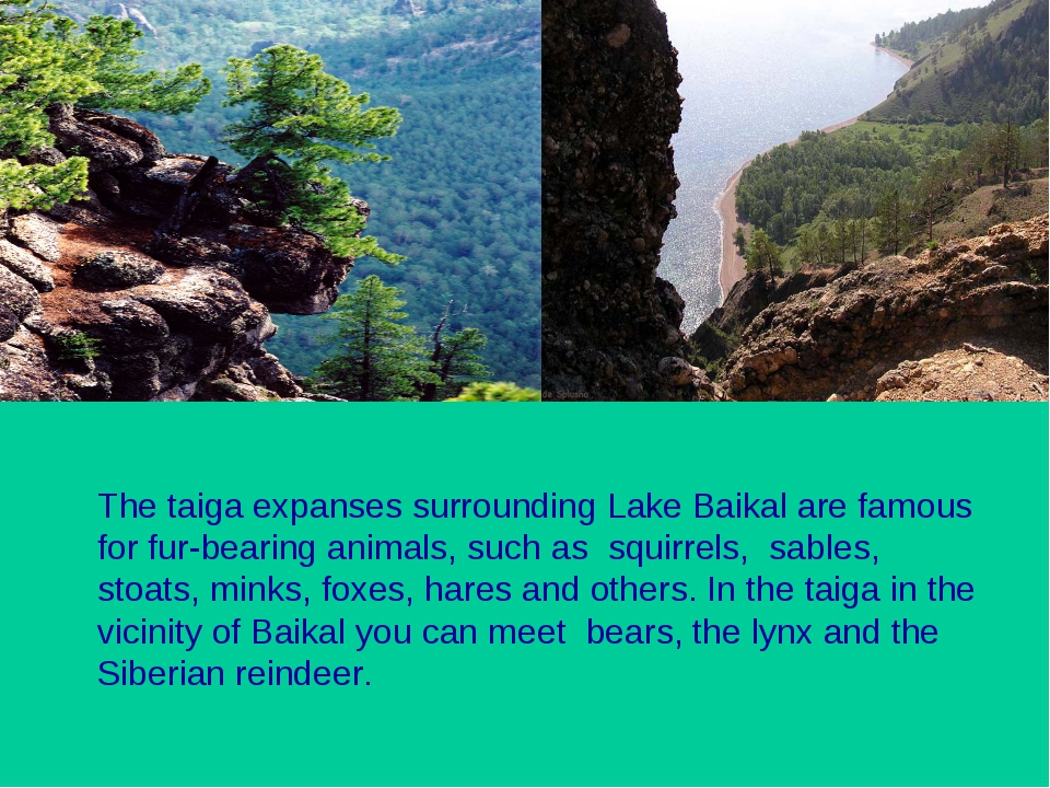 The taiga expanses surrounding Lake Baikal are famous for fur-bearing animals...