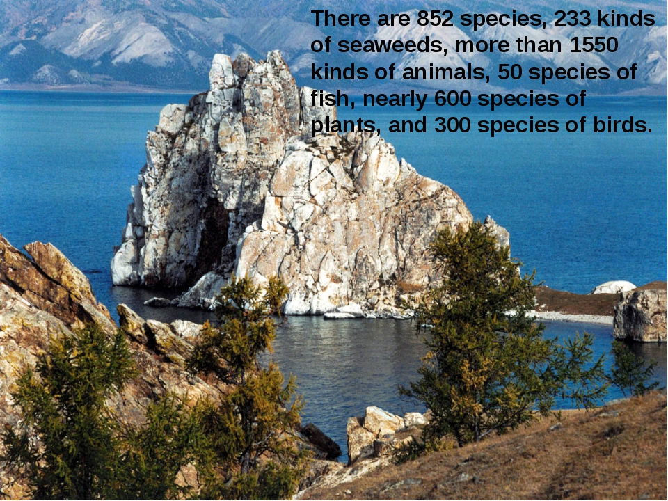 There are 852 species, 233 kinds of seaweeds, more than 1550 kinds of animals...