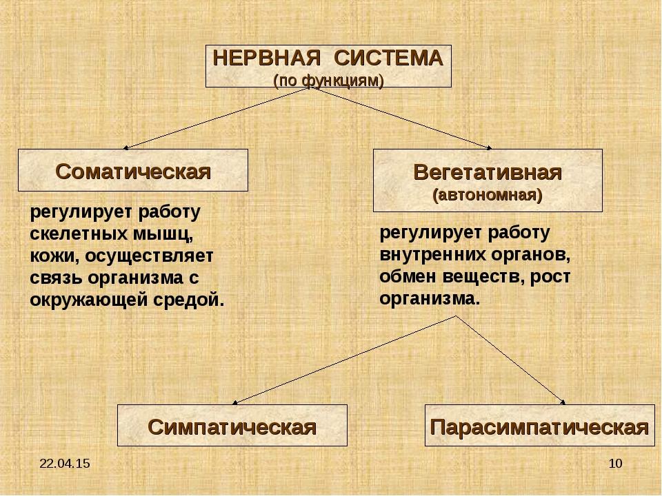 * * НЕРВНАЯ СИСТЕМА (по функциям) Соматическая Вегетативная (автономная) Симп...