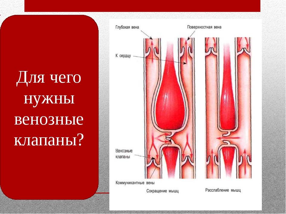 Для чего нужны венозные клапаны?
