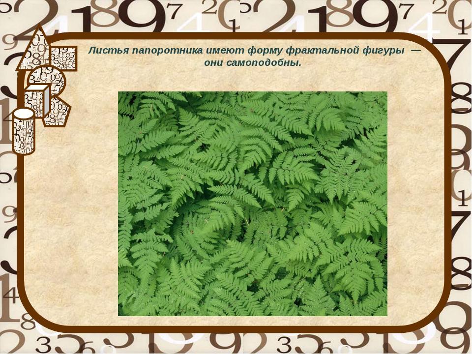 Листья папоротника имеют форму фрактальной фигуры — они самоподобны.