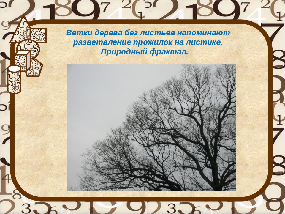 Ветки дерева без листьев напоминают разветвление прожилок на листике. Природн...