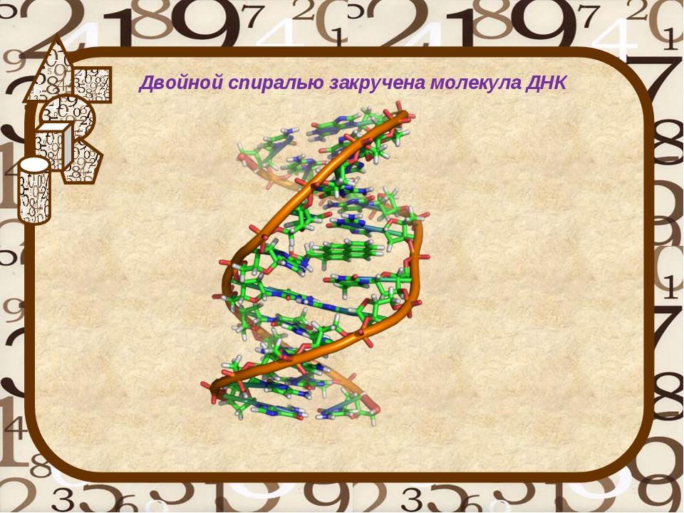 Двойной спиралью закручена молекула ДНК
