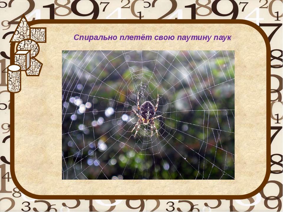 Спирально плетёт свою паутину паук