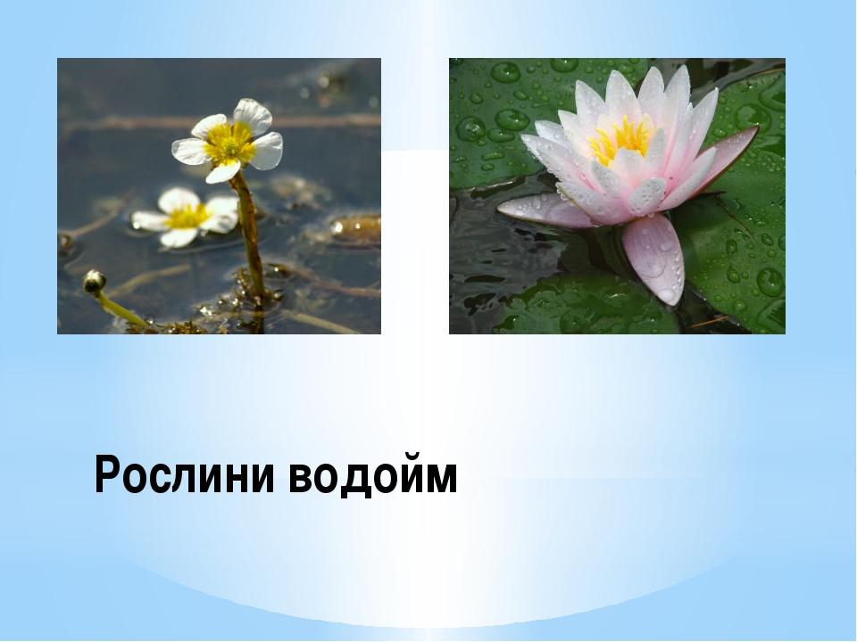 Рослини водойм