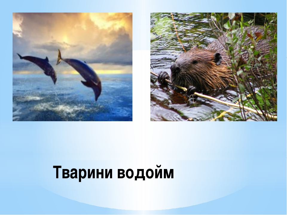 Тварини водойм