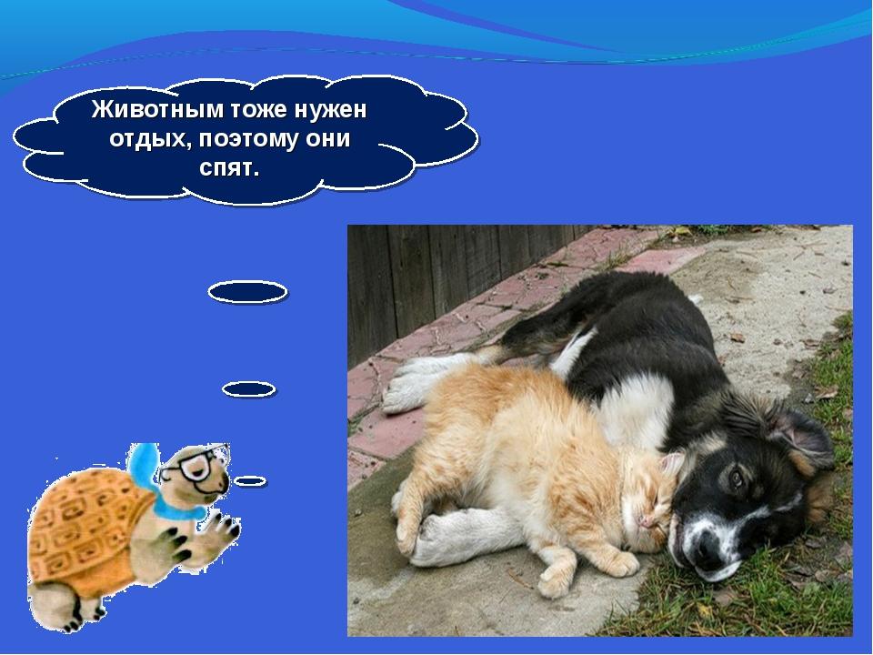 Животным тоже нужен отдых, поэтому они спят.
