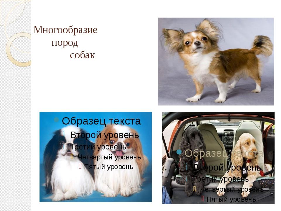 Многообразие пород собак