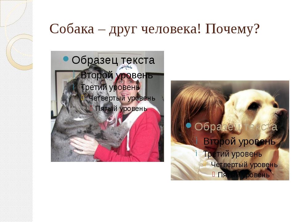 Собака – друг человека! Почему?