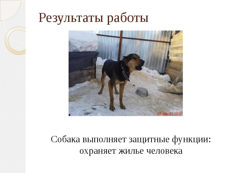 Результаты работы Собака выполняет защитные функции: охраняет жилье человека
