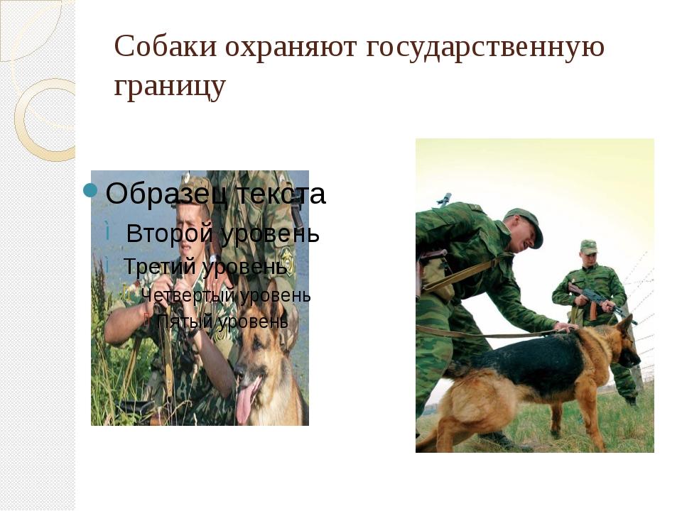 Собаки охраняют государственную границу