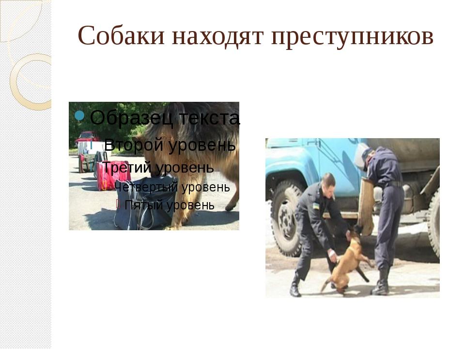 Собаки находят преступников