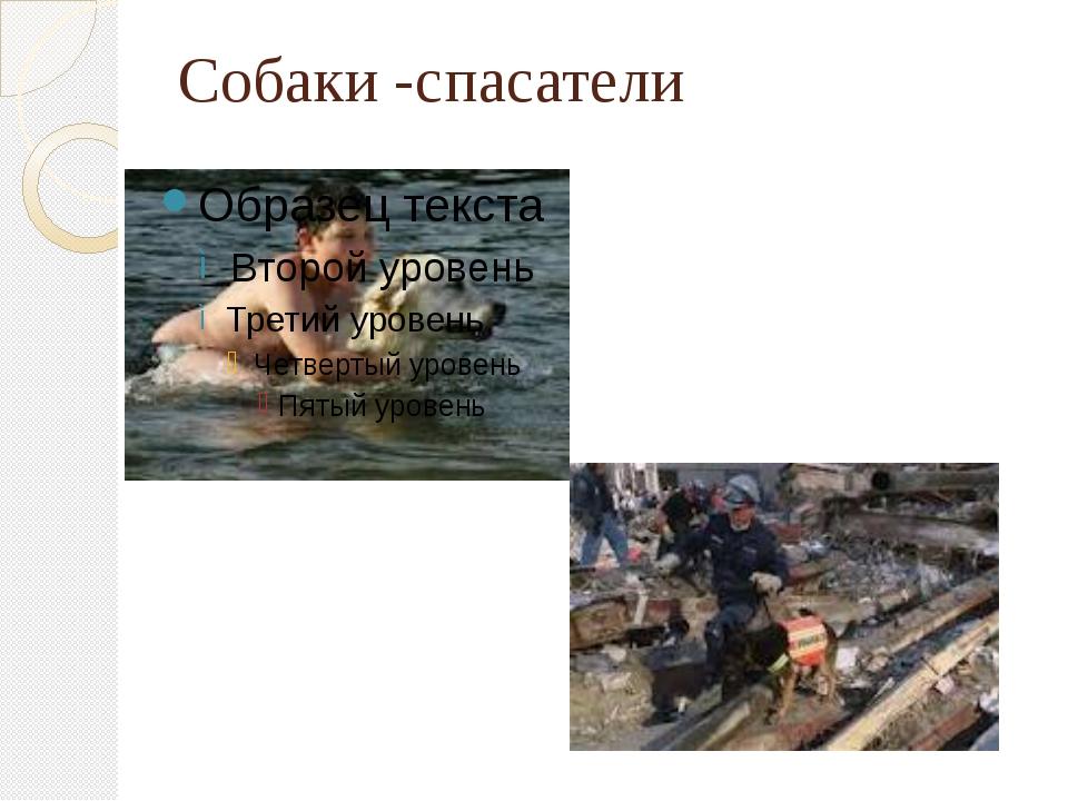 Собаки -спасатели