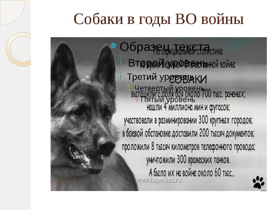 Собаки в годы ВО войны