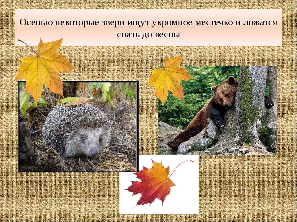 Осенью некоторые звери ищут укромное местечко и ложатся спать до весны