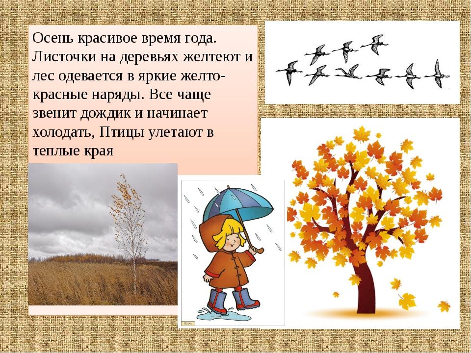 Осень красивое время года. Листочки на деревьях желтеют и лес одевается в ярк...