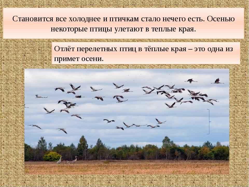 Становится все холоднее и птичкам стало нечего есть. Осенью некоторые птицы у...