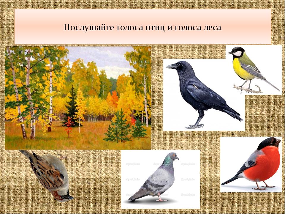 Послушайте голоса птиц и голоса леса