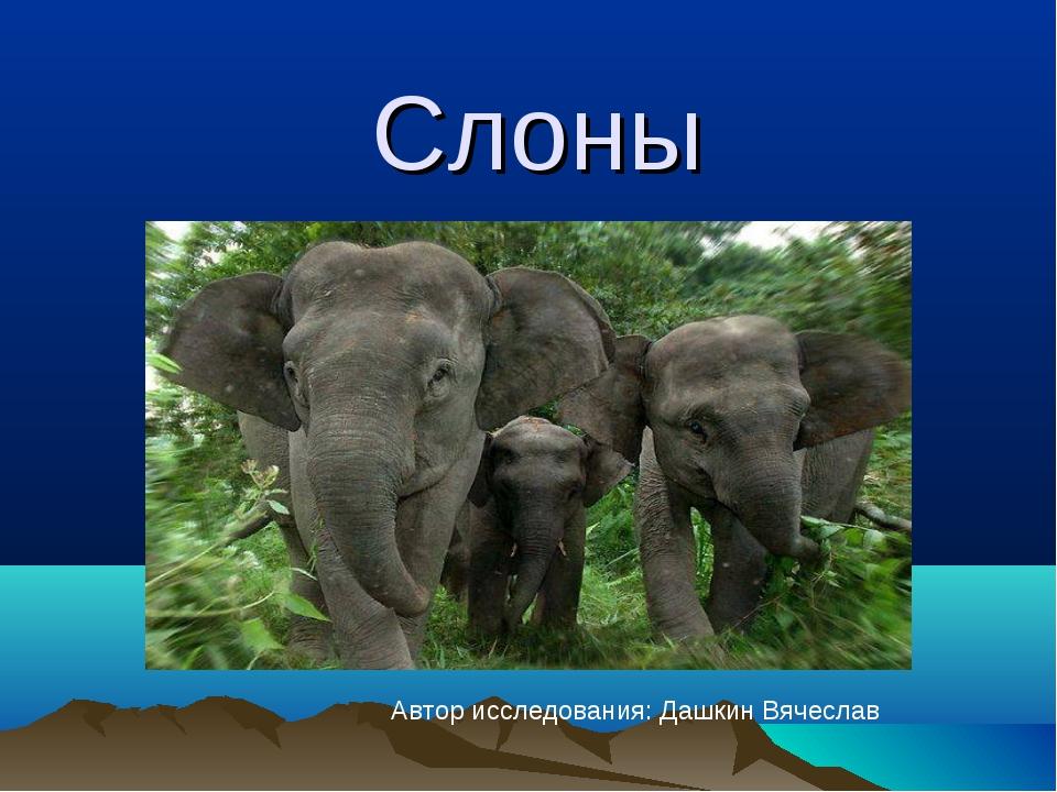 Слоны Автор исследования: Дашкин Вячеслав