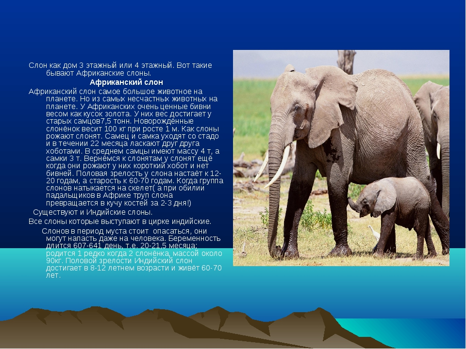 Слон как дом 3 этажный или 4 этажный. Вот такие бывают Африканские слоны. Аф...