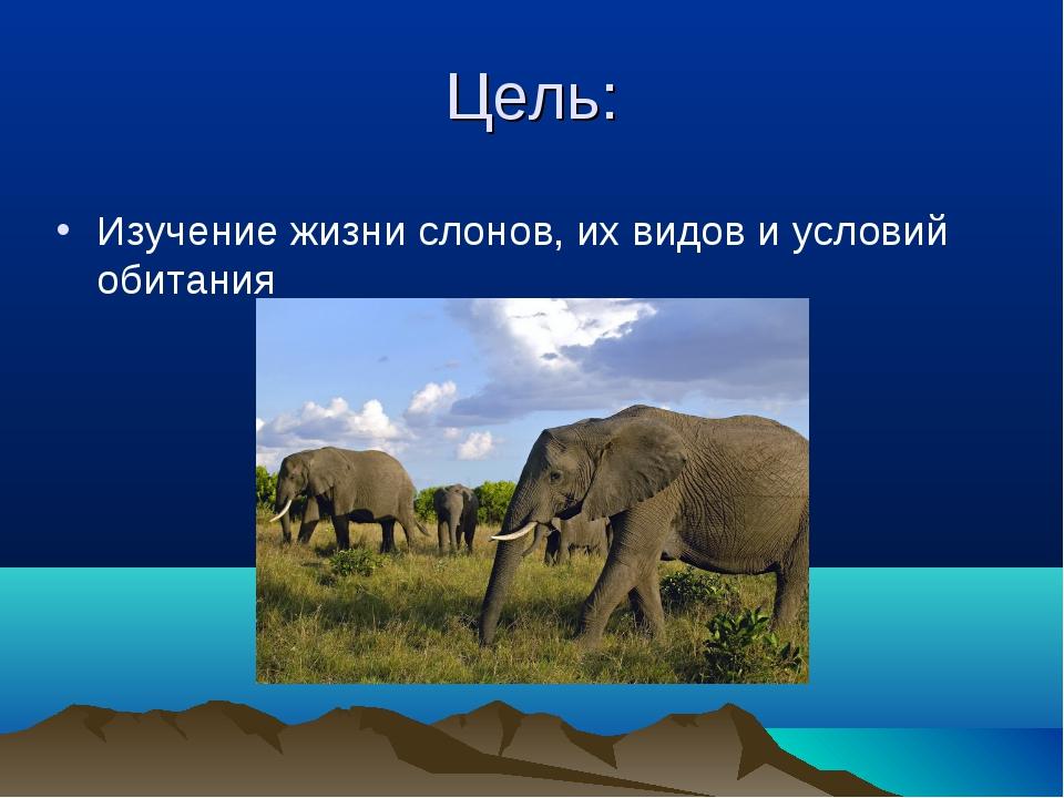 Цель: Изучение жизни слонов, их видов и условий обитания