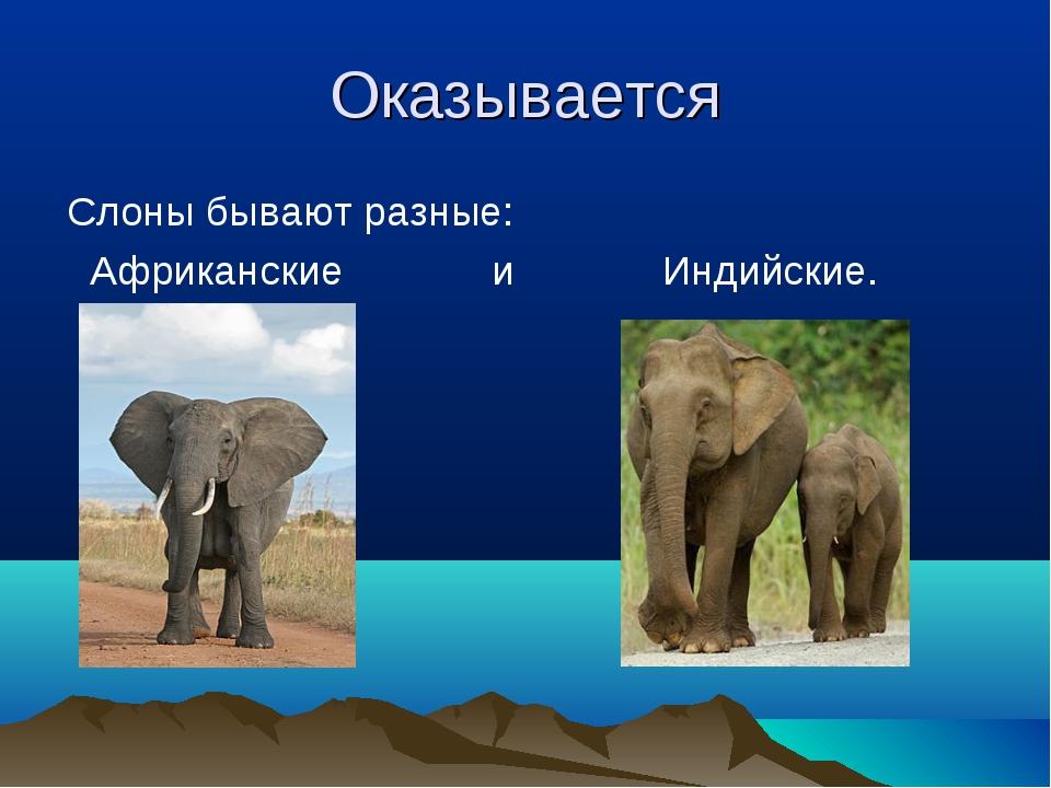Оказывается Слоны бывают разные: Африканские и Индийские.