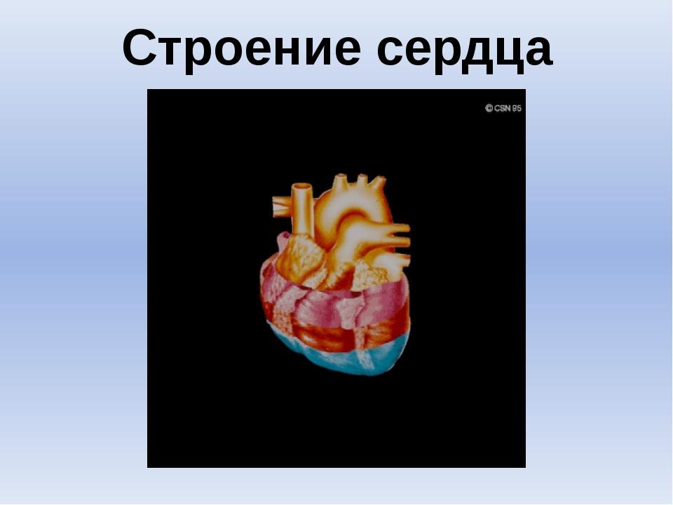 """Строение сердца Шишловская Е. Л., лицей """"Серпухов"""""""