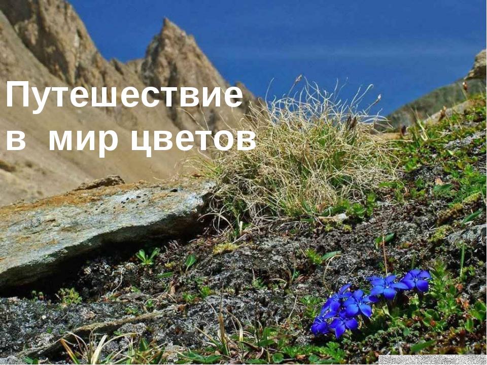 Путешествие в мир цветов
