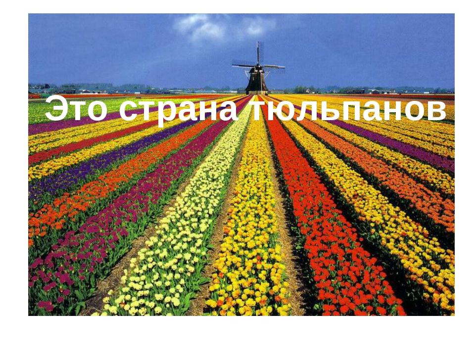 Это страна тюльпанов