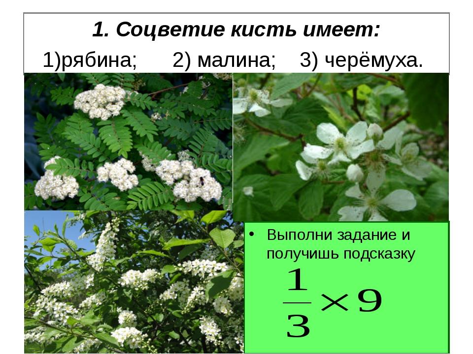 1. Соцветие кисть имеет: 1)рябина; 2) малина; 3) черёмуха. Выполни задание и...