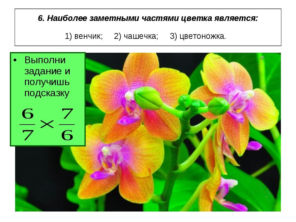 6. Наиболее заметными частями цветка является: 1) венчик; 2) чашечка; 3) цвет...