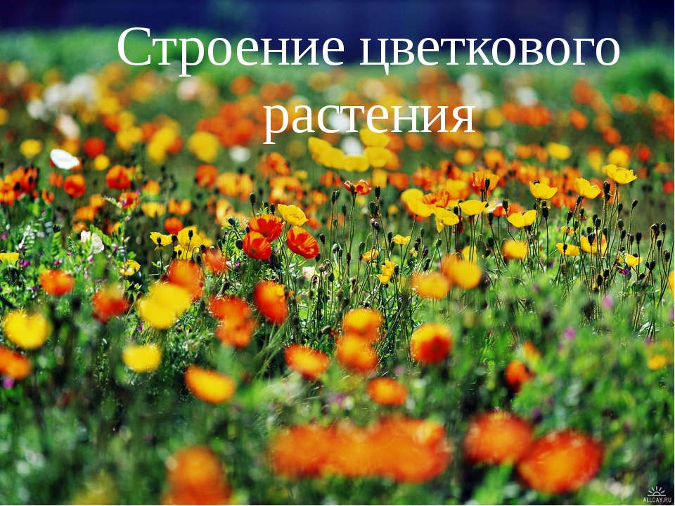 Строение цветкового растения