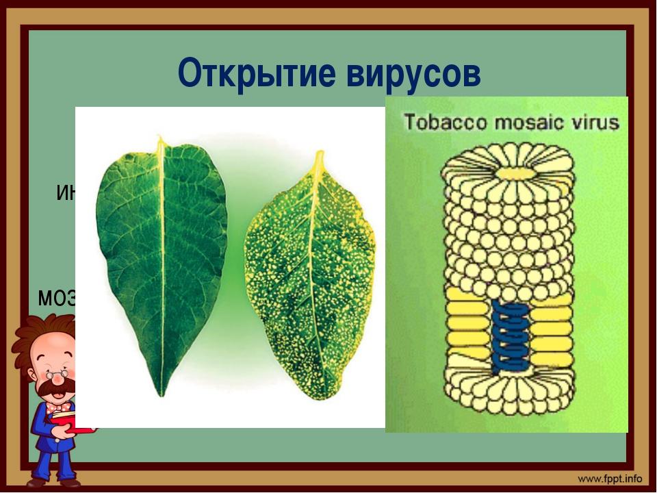Открытие вирусов Д.И. Ивановский, ещё, будучи студентом, интересовался болезн...