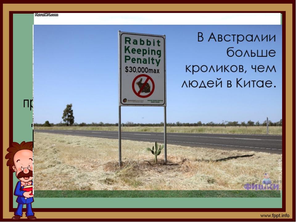 В 50-х годах 20 века в Австралии остро встала проблема с дикими кроликами, ко...
