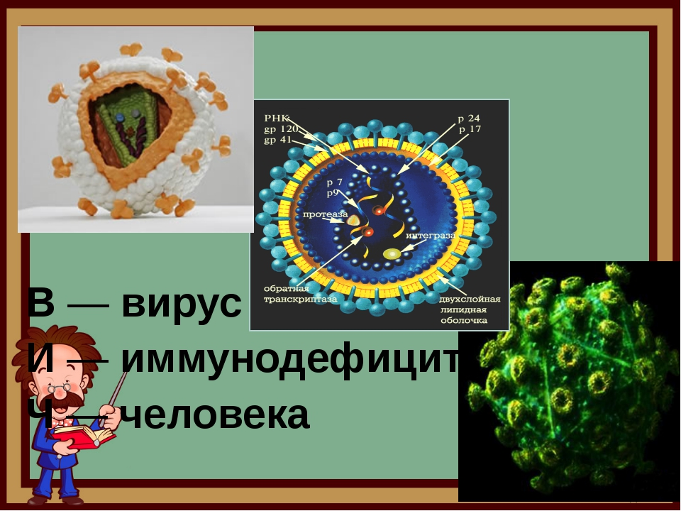 В — вирус И — иммунодефицита Ч — человека