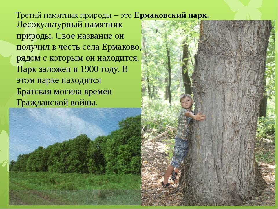 Третий памятник природы – это Ермаковский парк. Лесокультурный памятник приро...