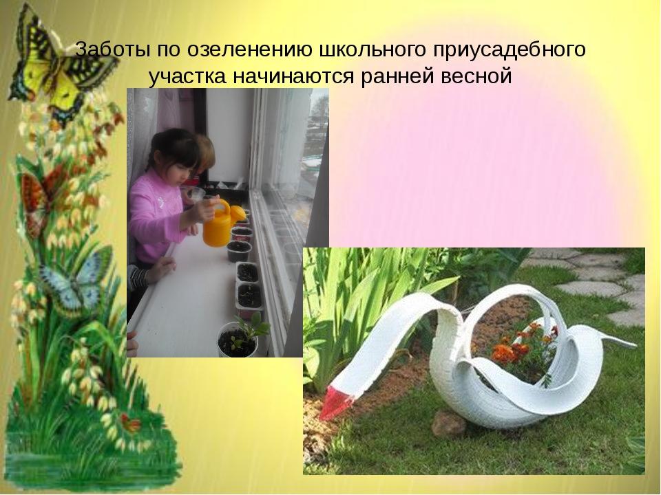 Заботы по озеленению школьного приусадебного участка начинаются ранней весной