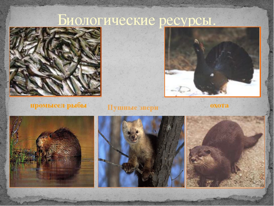 Биологические ресурсы. промысел рыбы охота Пушные звери
