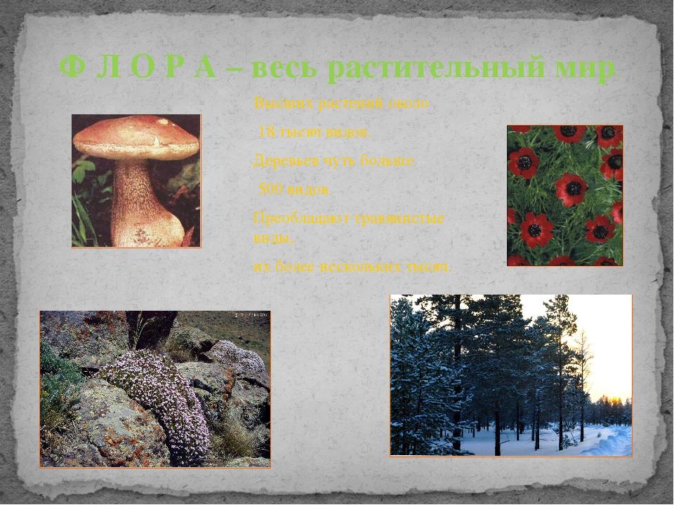 Ф Л О Р А – весь растительный мир. Высших растений около 18 тысяч видов. Дере...