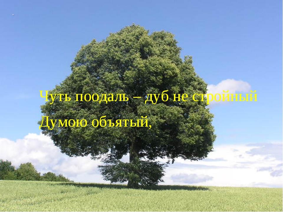 Чуть поодаль – дуб не стройный Думою объятый,