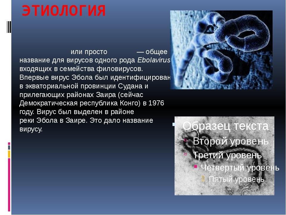 ЭТИОЛОГИЯ ВирусЭбо́лаили простоЭбо́ла— общее название для вирусов одного...
