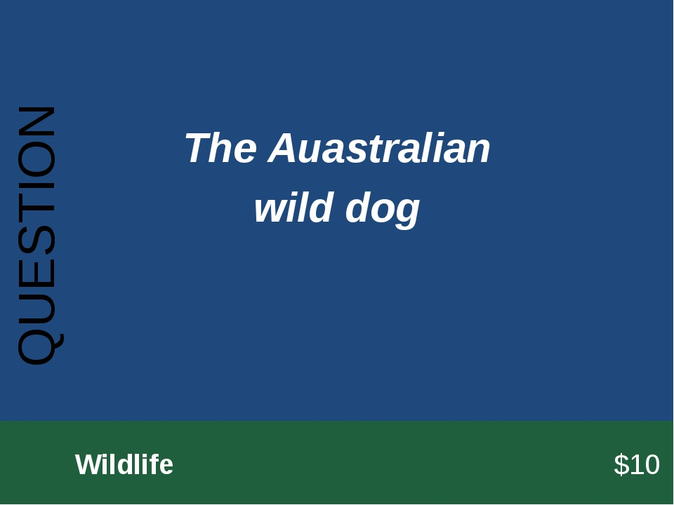 QUESTION 		Wildlife							$10 The Auastralian wild dog