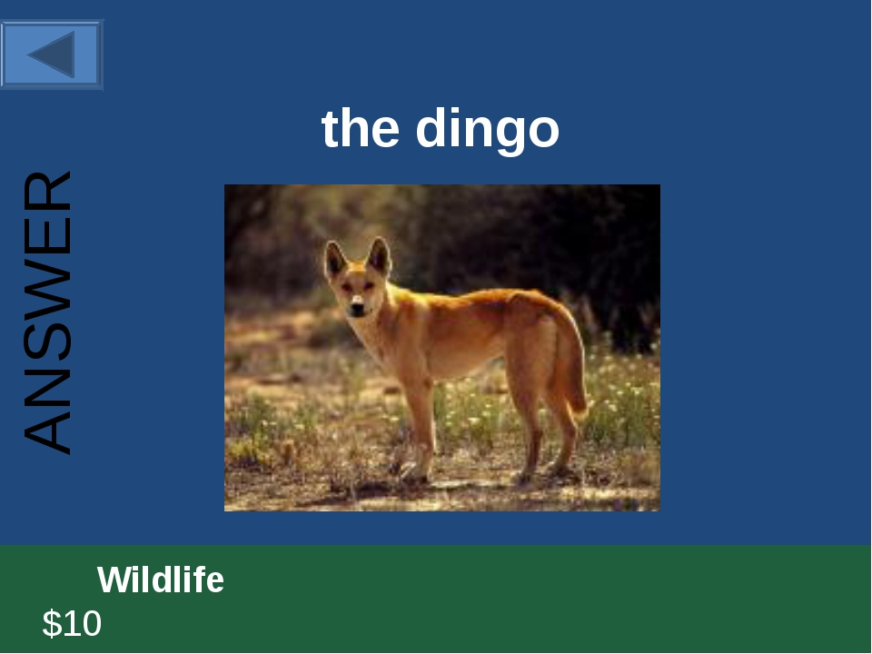 the dingo 		Wildlife						 $10 ANSWER