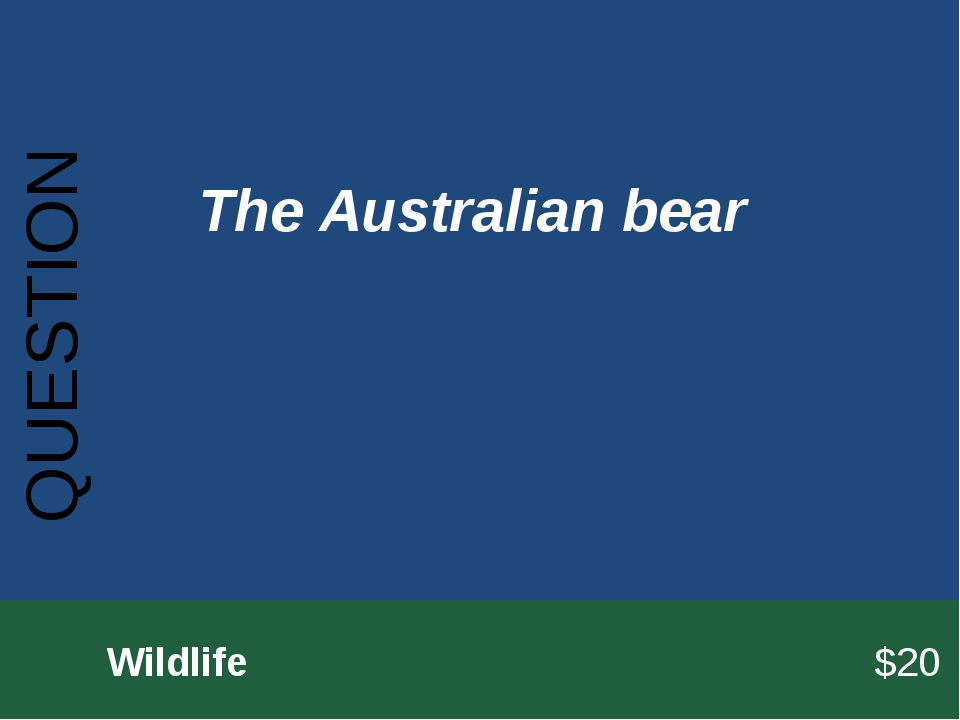 QUESTION 		Wildlife							$20 The Australian bear