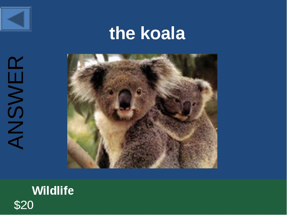 the koala 		Wildlife						 $20 ANSWER