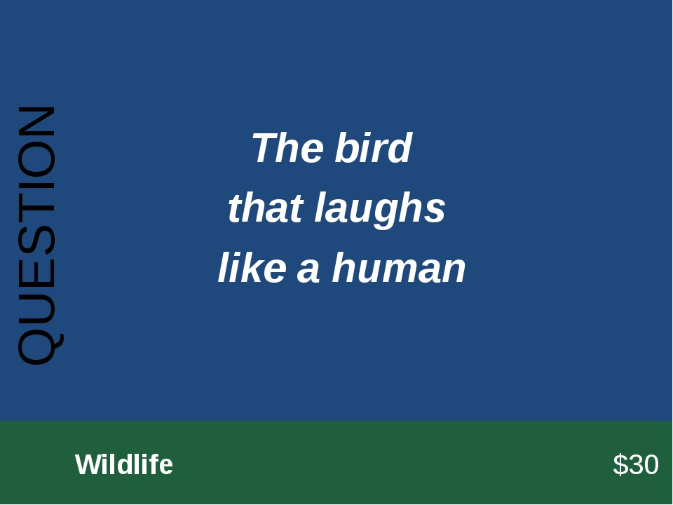 QUESTION 		Wildlife							$30 The bird that laughs like a human