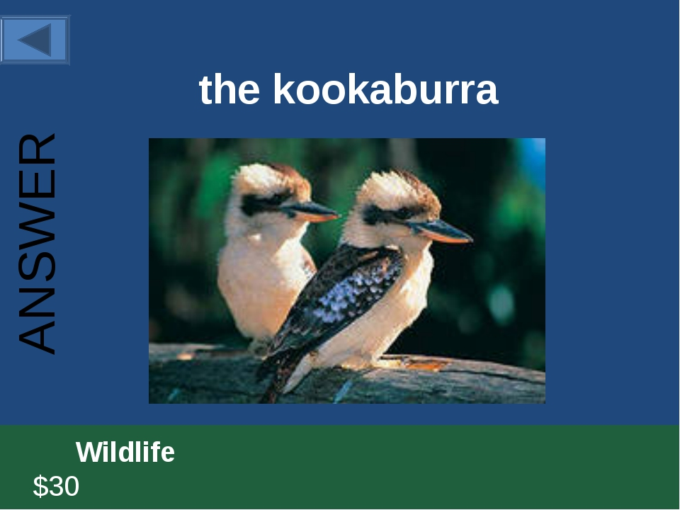 the kookaburra 		Wildlife						 $30 ANSWER
