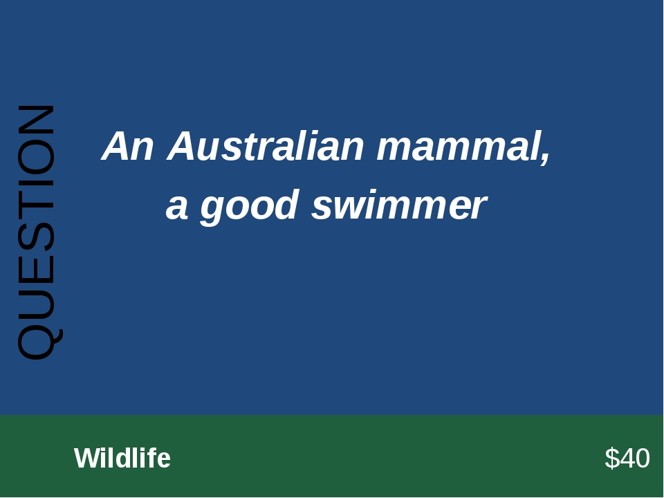 QUESTION 		Wildlife							$40 An Australian mammal, a good swimmer