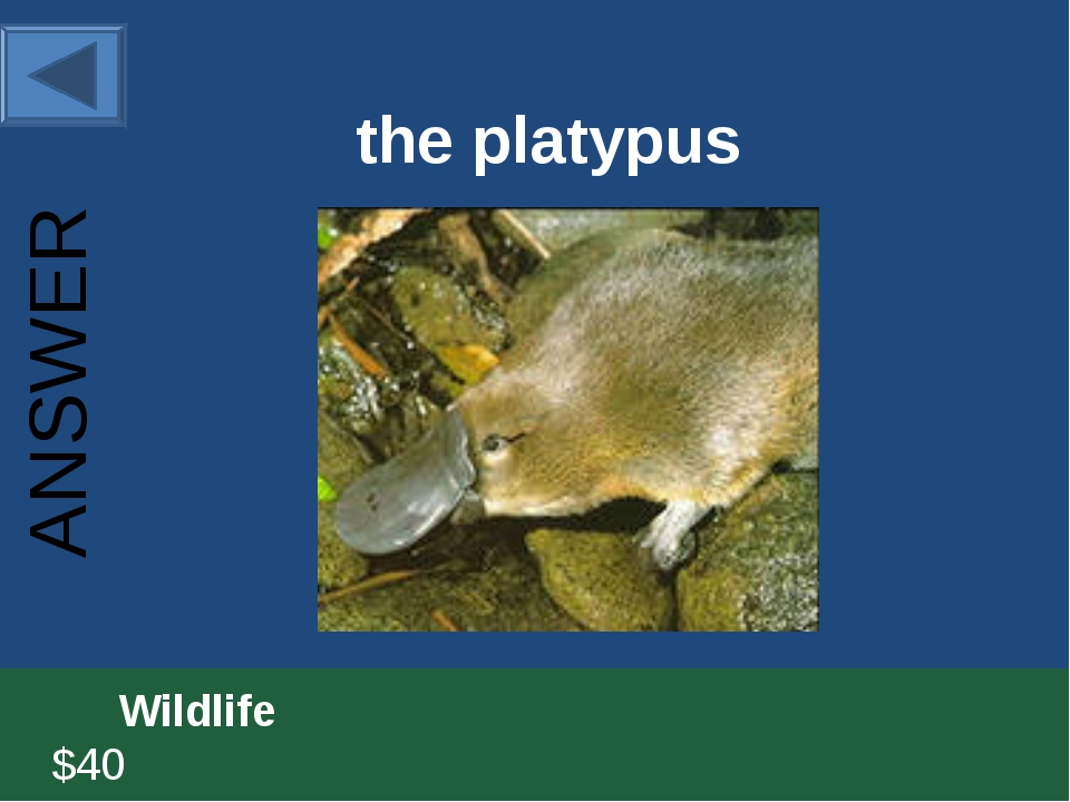 the platypus 		Wildlife						 $40 ANSWER